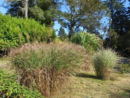 grasses3