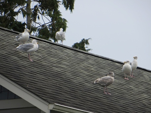 We had a talkative audience from the next door roof.