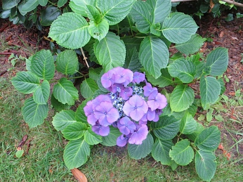 a hydrangea flower on one long sideways stem