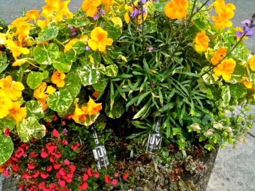 Ilwaco planter, Allan's photo