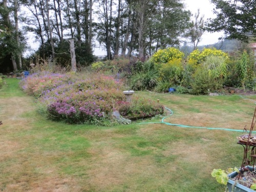 Just over the recent blast of heat. the lawn had gone brown in part of the back garden.