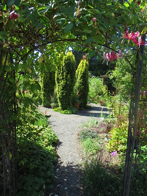 the weekly view into the fenced garden