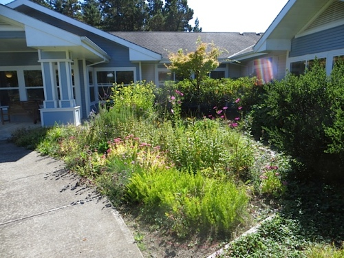 My mom's old garden, the NE quadrant, is the best looking right now.  It will benefit from rudbeckias next year.