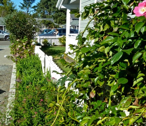 Allan's photo, narrow garden beside driveway