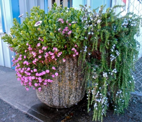 Peninsula Sanitation; I had especially requested photos of this planter.