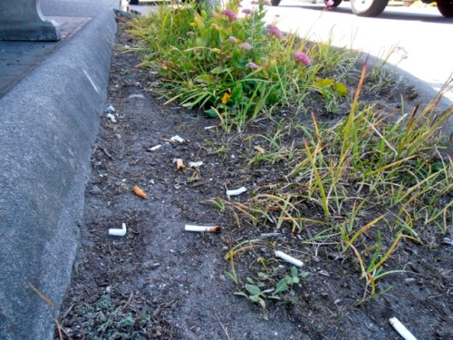 Allan's photo and caption:  Outside new mini mart, someone sowed tobacco for next year.