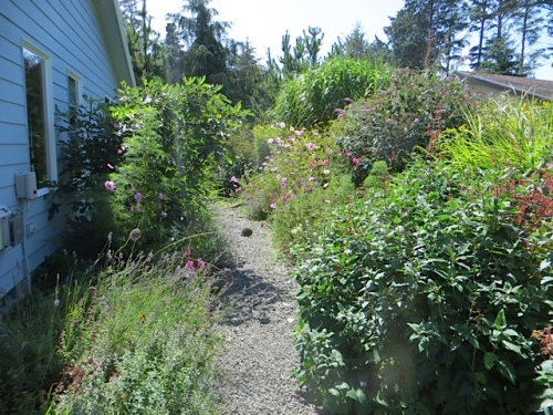 I had to trim some flopped cosmos back off of the path; the deer do tend to push things over.