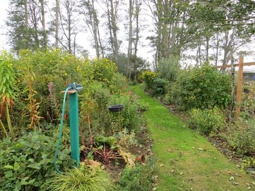 back garden, west side path