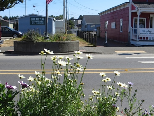 planter in front of the smokeshop with 'Star Cluster' Coreopsis.