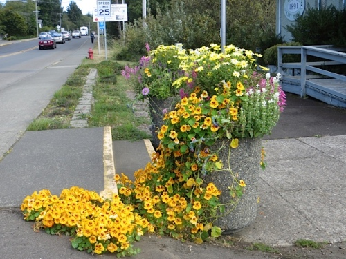 On our way out of town to work:  one of our planters at Ilwaco City Hall, draped like a dress with a train on it.