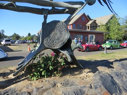 clover and sedum growing on the condor rock