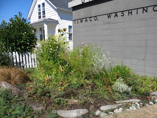 We took enough time to water our volunteer garden at the post office; in full sun, it gets terribly dry.