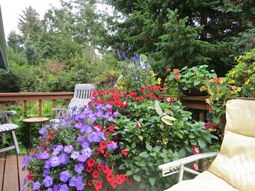 the deck with pots planted by Basket Case Greenhouse Nancy.