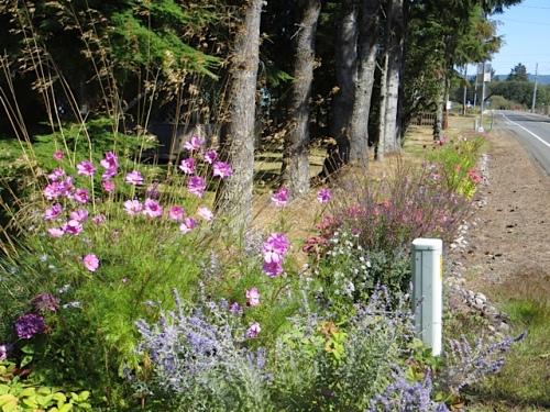 the roadside garden