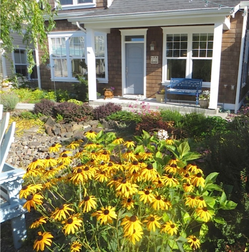 All of a sudden I am in love with rudbeckia, and I have absolutely none in any of my gardens.