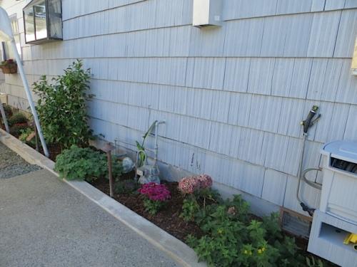side garden by driveway