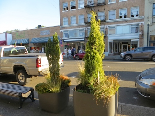 Astoria's Commercial Street has well maintained container gardens.