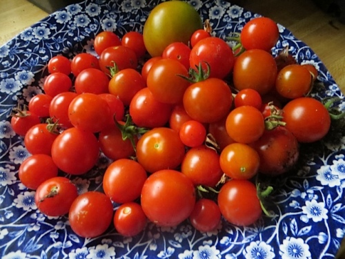 tomatoes from the greenhouse.  (Only cherry tomatoes do well for me.)