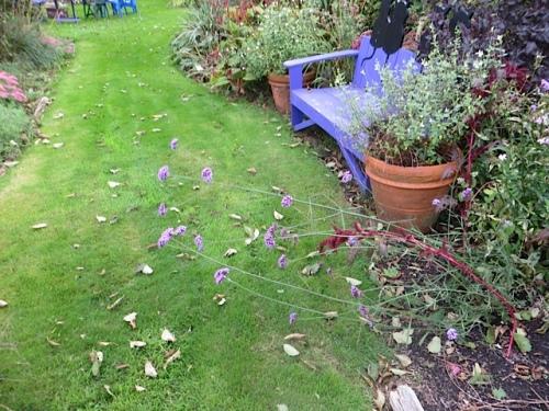 Verbena bonariensis brought low by rain and wind