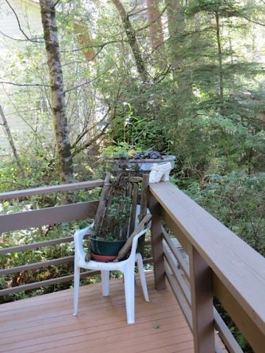 deck with wetlands view
