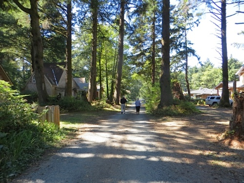 down a woodsy street