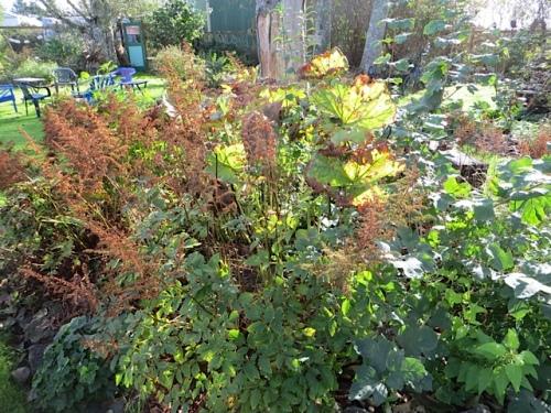 autumnal astilbes