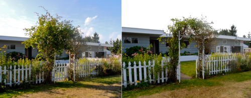 Allan's pruning project, before and after