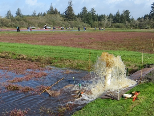 flooding for tomorrow's harvest; note the tarp to direct the water into the bog