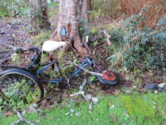 An old tricycle had broken from a branch falling from one of our trees.