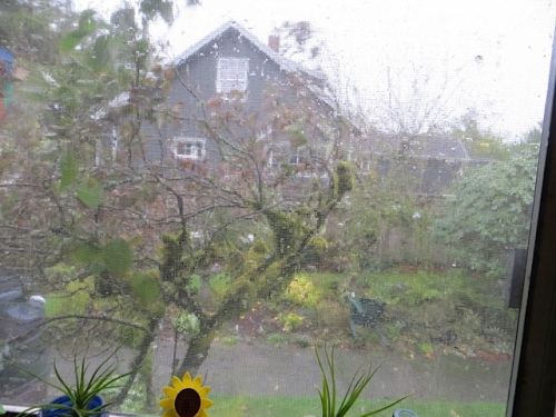 dogwood outside kitchen window whipping sideways in wind and rain