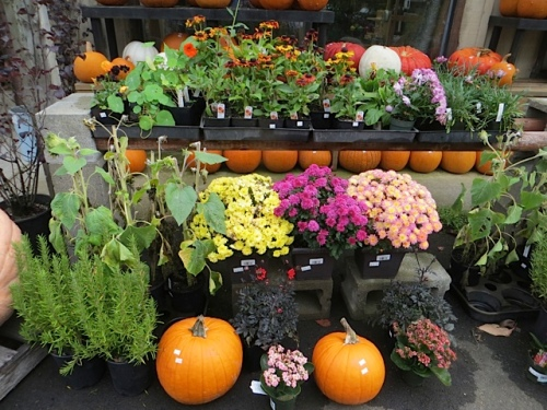 fall colour at the planter box