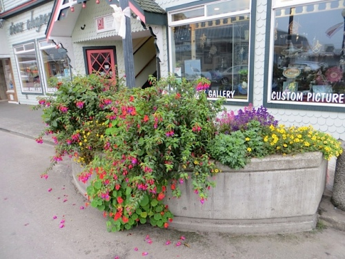 The most excellent planter by the Campiche Gallery.  Note: more dahlias and more small hardy fuchsias next year.