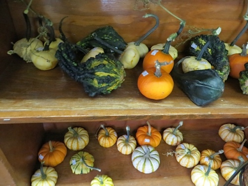 and also has lots of adorable little gourds.