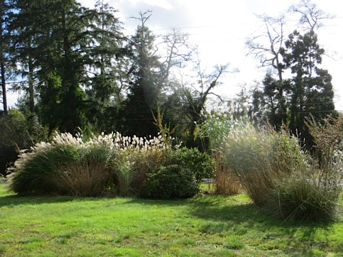 the ornamental grass borders backlit by sunshine
