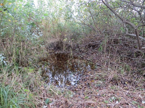 Rainwater has begun to fill the meander line seasonal pond at the south end of our property.