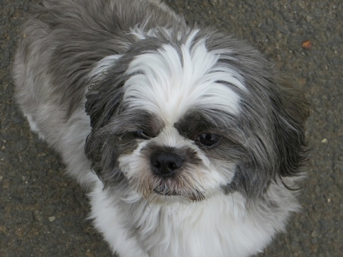 My good friend Mitzu the Shih tzu greeted me at The Anchorage.