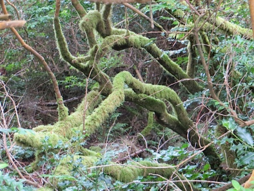 mossy branches by our KBC parking spot behind the garden