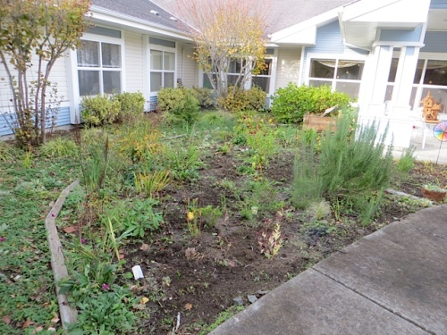 We got the NW quadrant mostly cleared of running yarrow and aster and too much columbine.