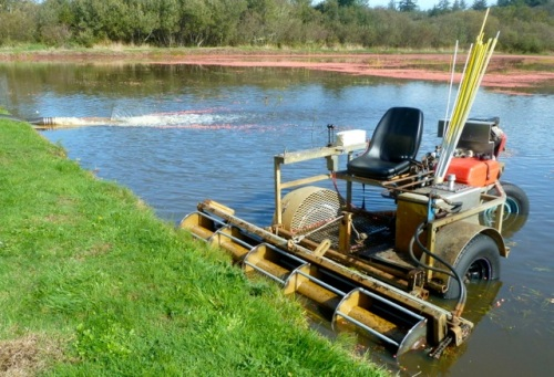 Allan's photo: This amphibious vehicle flails the berries off the stems.
