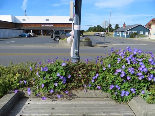 northernmost planter on east side with Geranium 'Rozanne' going strong.