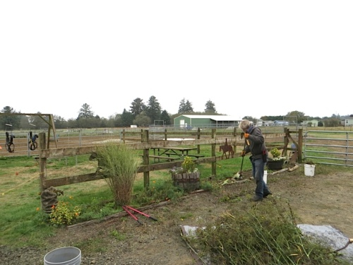 Allan finished the job with a pile of bronze fennel.