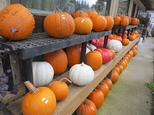 The Planter Box is pumpkin central....