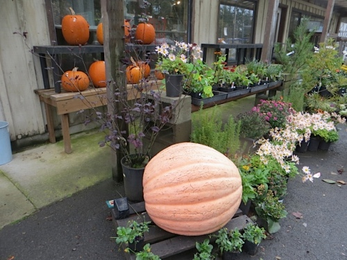 Not many pumpkins remained!