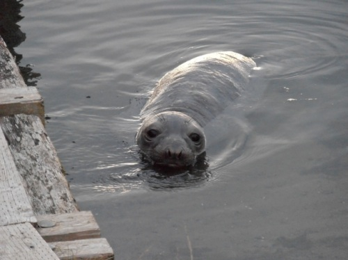 seal6