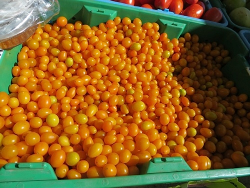 De Asis Produce: Tomatoes are the one food item I grew well this year.
