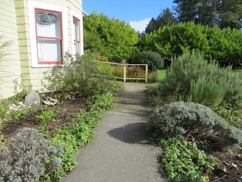 Cosmos-less entry garden