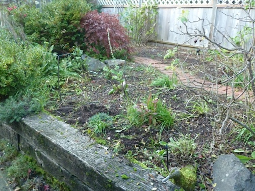 Some short alliums albopilosum and schubertii got planted atop this wall where they will be so easy to admire.