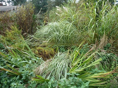 Some of the ornamental grasses are flopping all over other plants.
