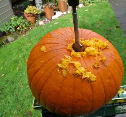 He drilled out a pumpkin for the top of the front garden tuteur.
