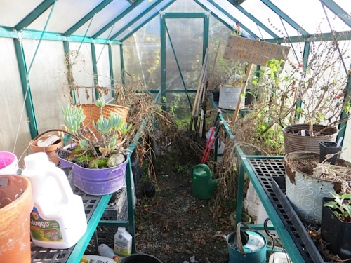inside: horribly messy little greenhouse